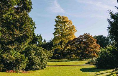 Swiss Garden Trees